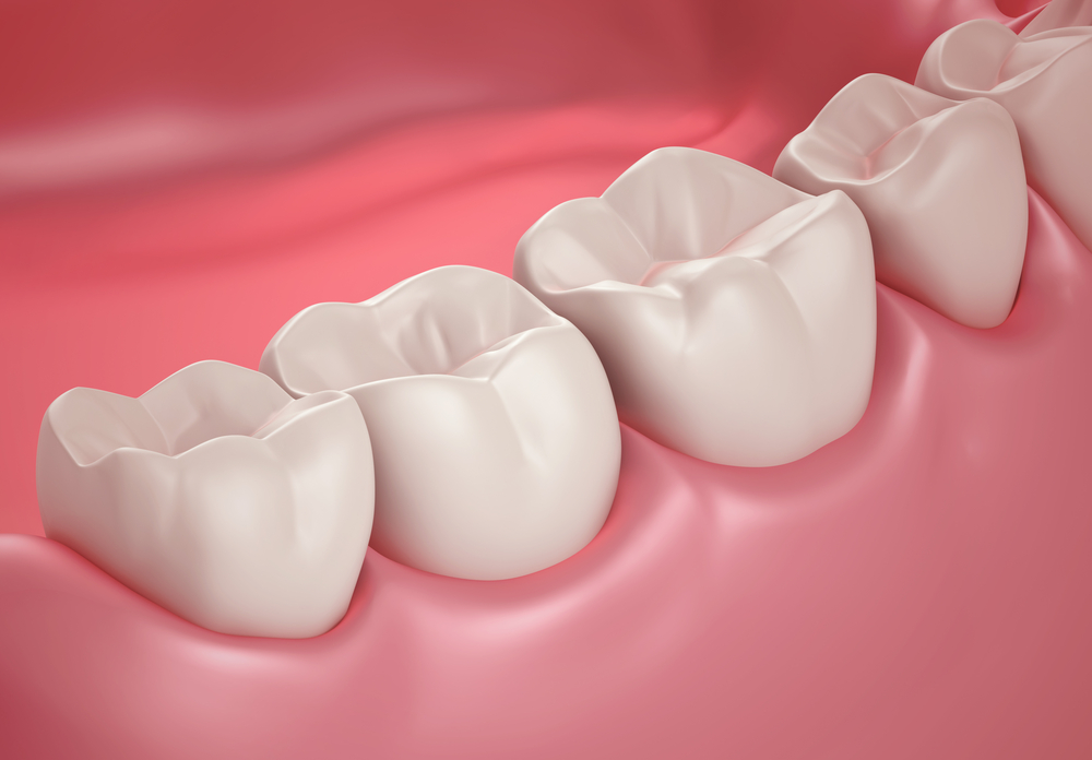 Image result for Teeth and Gums